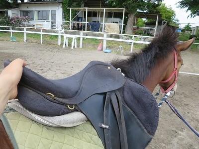 新馬調教 鞍の教育