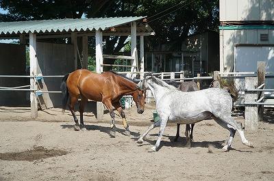 馬には馬の世界がある