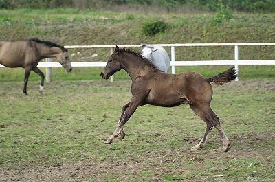 子馬の毛色の変化
