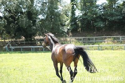 走る美しい馬
