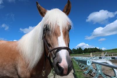 馬とコミュニケーションしたい!