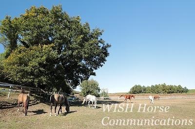 乗馬コミュニケーション
