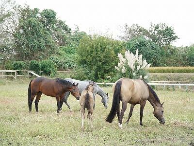 馬は本来群れ生活するもの