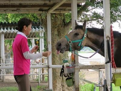 馬と話し合う