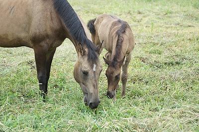 ほったらかしではいい馬には育ちません