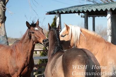 穏やかな馬で乗馬