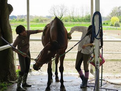 馬の手入れはとっても楽しい!