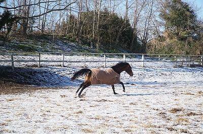 馬ははしゃいで庭駆け回り
