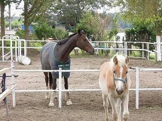 乗馬クラブではいろいろな物語があります
