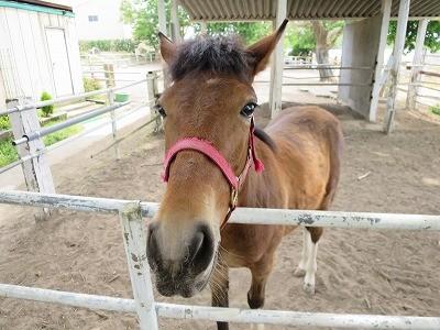 新馬調教 人も馬も一つの群れ