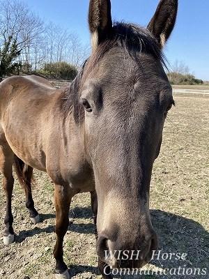 馬との幸せの時間