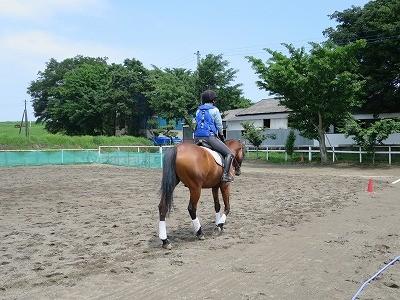 馬とパートナーに