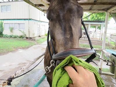馬とラポールを築く