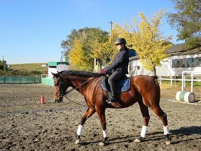 馬と無理なく楽しく走る方法