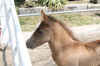 馬を大事にする