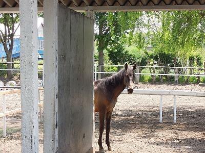 馬の喜びは私の喜び