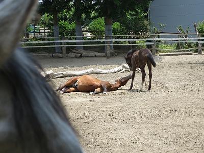 楽しい馬との会話