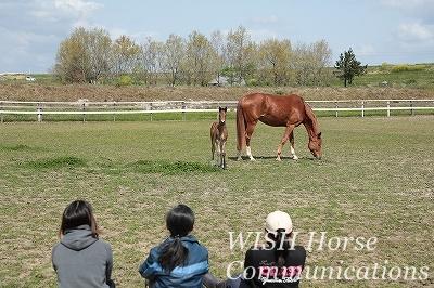 愛情豊かな馬達