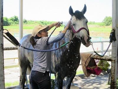 幸せな馬の手入れ