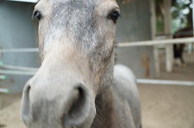 馬のクオリティーオブライフを守る