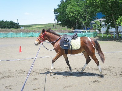馬が乗せてくれるってすごいこと