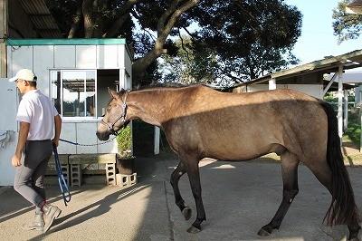 馬と愛し愛され生きるのさ!