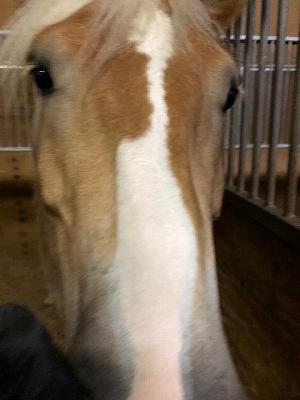 馬は一人一人をしっかり認識している