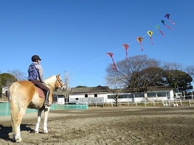 ナチュラルホースマンシップで馬と遊ぼう!