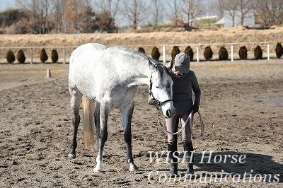 感動の乗馬