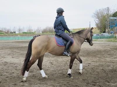 馬との時間