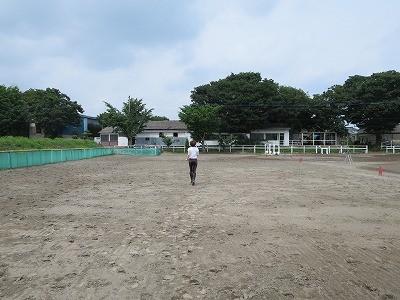 楽しい乗馬の練習