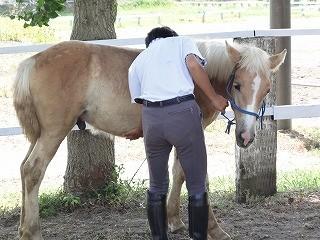 馬の馴化でなでまくり