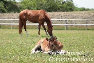 牧場 子馬