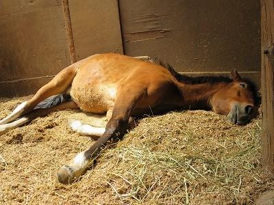 新馬調教 馬はとにかくリラックスさせること