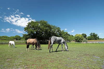 雨上がりの馬たち