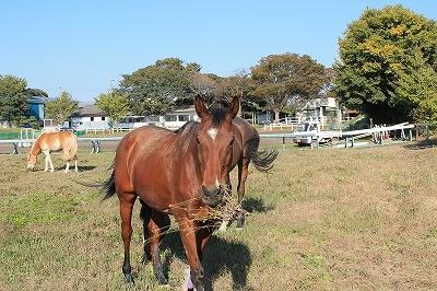 馬と秋の日