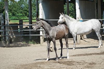 乗馬のためにはまず馬を知ること!