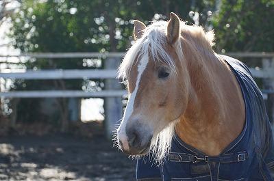 馬は優しくて力持ち