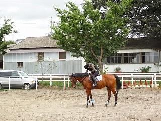 馬と人との絆を感じる乗馬を
