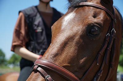 価値観と常識の違いが馬の違いを生む