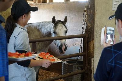 馬と人とで分かち合い