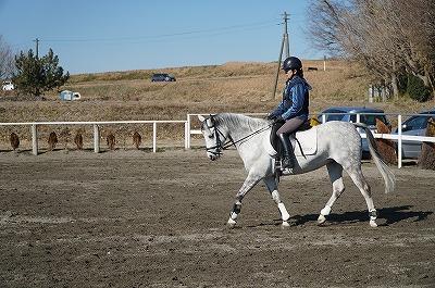軽いタッチで馬とのコミュニケーションを楽しむ