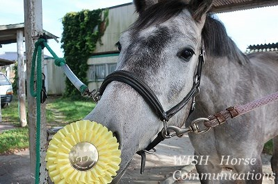 賢い馬の表情