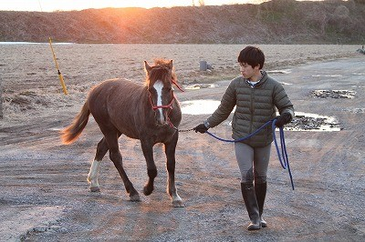 夕焼け色の乗馬