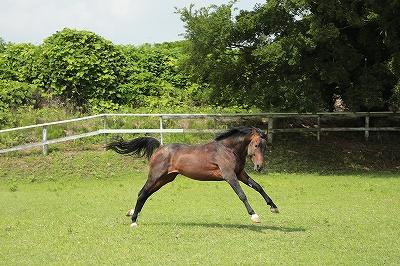 馬を健康に飼う