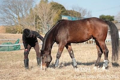 馬と心の交流