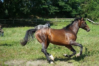 全日本に出て本当に馬の健康が大切だと思いました。