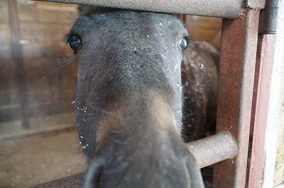 可愛い馬とふれあえる