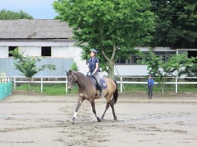 馬場馬術の経路練習