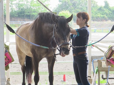 リラックスしている馬の表情